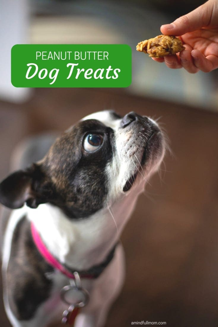 These Peanut Butter Dog Treats are the perfect treat for your dog! Made with only four ingredients, these cookies for dogs are the perfect homemade dog treat.