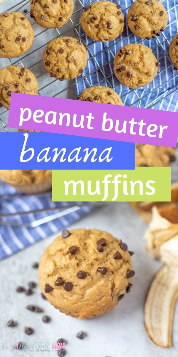 These Peanut Butter Banana Muffins with chocolate chips are easy to make. They make a delicous, healthy snack or make ahead breakfast!#peanutbutterrecipes #bananamuffins #chocolatechipmuffins  #peanutbutter #chocolatechip
